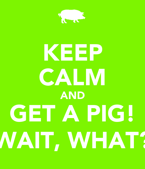 KEEP CALM AND GET A PIG! WAIT, WHAT?