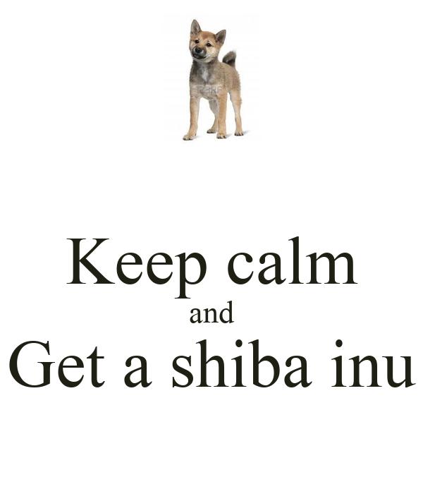 Keep calm and Get a shiba inu