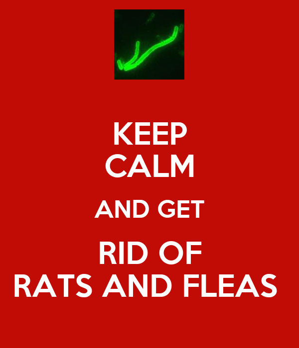 KEEP CALM AND GET RID OF RATS AND FLEAS