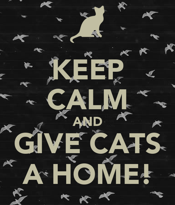 KEEP CALM AND GIVE CATS A HOME!