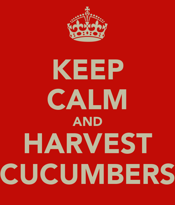 KEEP CALM AND HARVEST CUCUMBERS