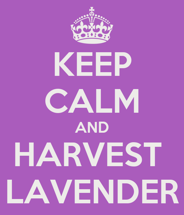 KEEP CALM AND  HARVEST   LAVENDER