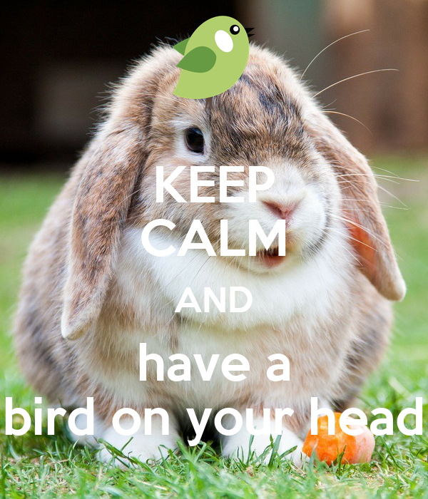 KEEP CALM AND have a bird on your head