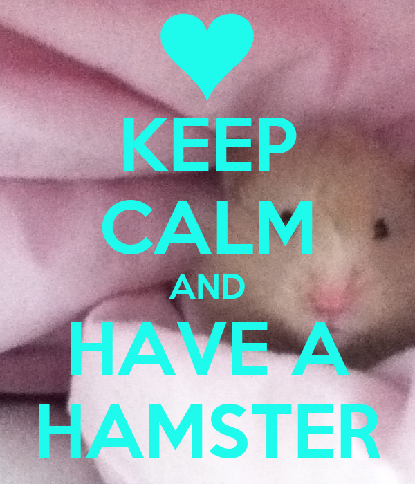 KEEP CALM AND HAVE A HAMSTER