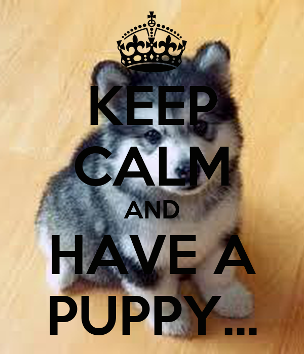 KEEP CALM AND HAVE A PUPPY...