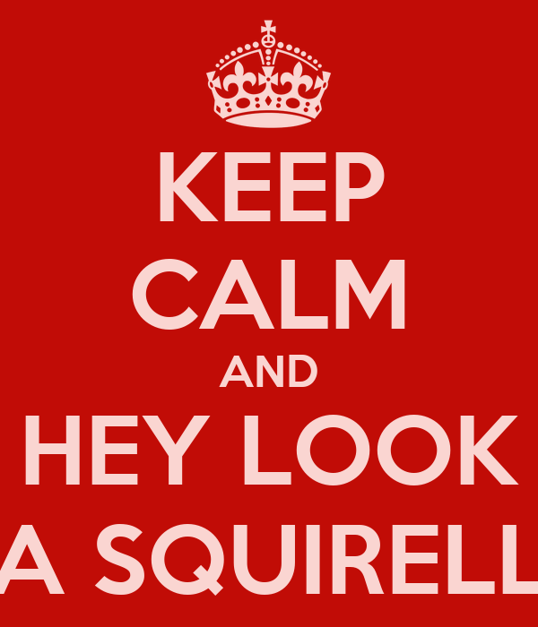 KEEP CALM AND HEY LOOK A SQUIRELL