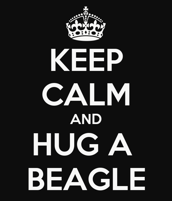 KEEP CALM AND HUG A  BEAGLE