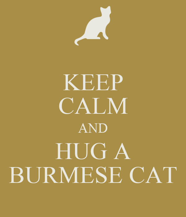 KEEP CALM AND HUG A BURMESE CAT