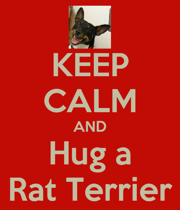 KEEP CALM AND Hug a Rat Terrier