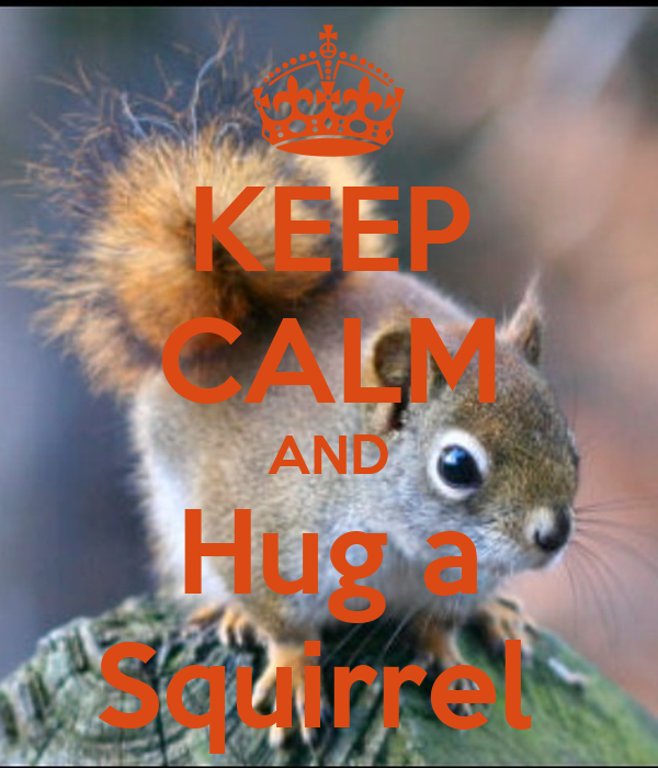 KEEP CALM AND Hug a Squirrel