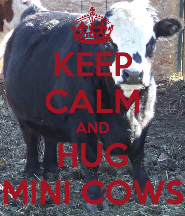 KEEP CALM AND HUG MINI COWS
