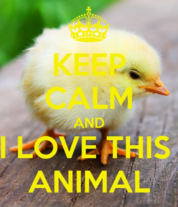 KEEP CALM AND I LOVE THIS  ANIMAL