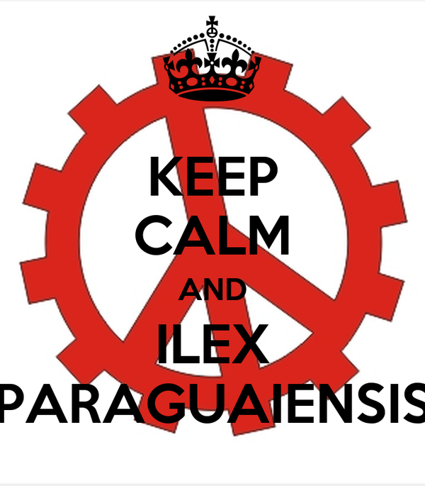 KEEP CALM AND ILEX PARAGUAIENSIS