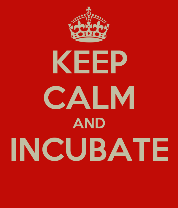 KEEP CALM AND INCUBATE