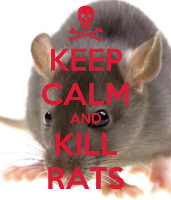KEEP CALM AND KILL RATS