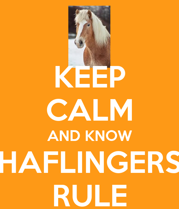 KEEP CALM AND KNOW HAFLINGERS RULE