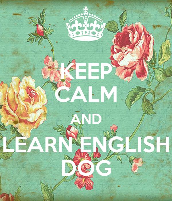 KEEP CALM AND LEARN ENGLISH DOG