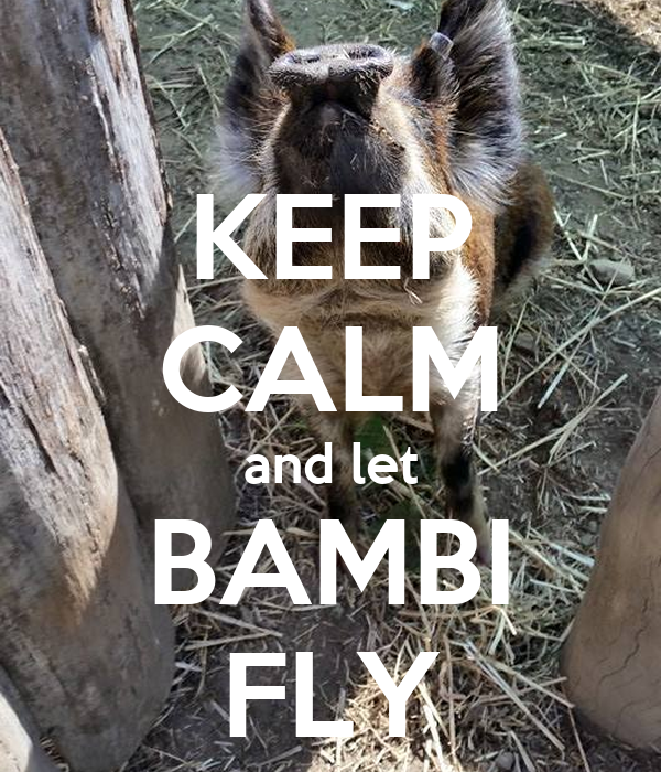 KEEP CALM and let BAMBI FLY