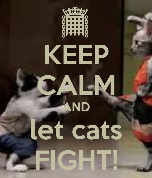 KEEP CALM AND let cats FIGHT!