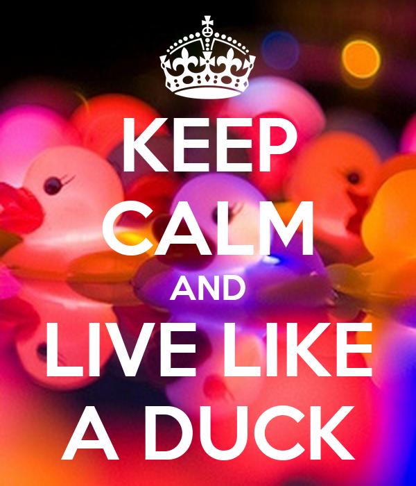 KEEP CALM AND LIVE LIKE A DUCK