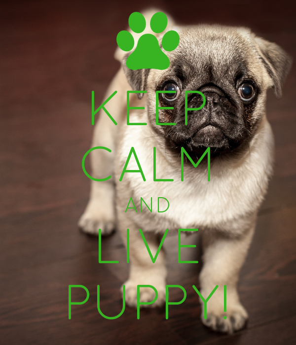 KEEP CALM AND LIVE PUPPY!