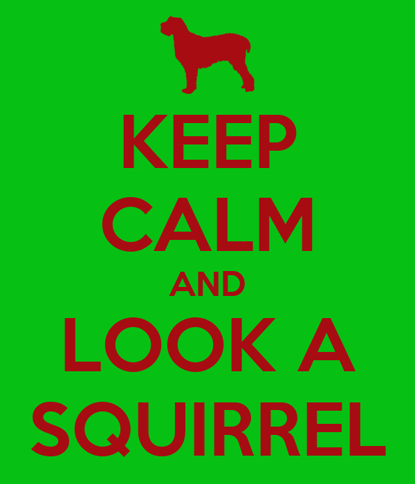 KEEP CALM AND LOOK A SQUIRREL
