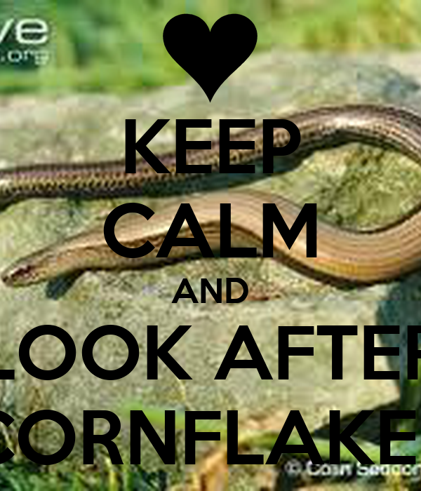 KEEP CALM AND LOOK AFTER CORNFLAKES
