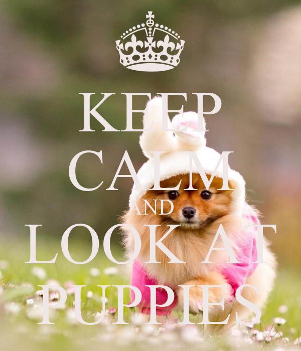 KEEP CALM AND LOOK AT PUPPIES