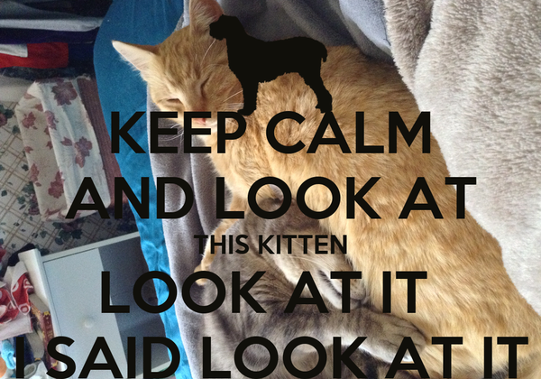 KEEP CALM AND LOOK AT THIS KITTEN LOOK AT IT  I SAID LOOK AT IT