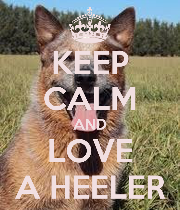 KEEP CALM AND LOVE A HEELER