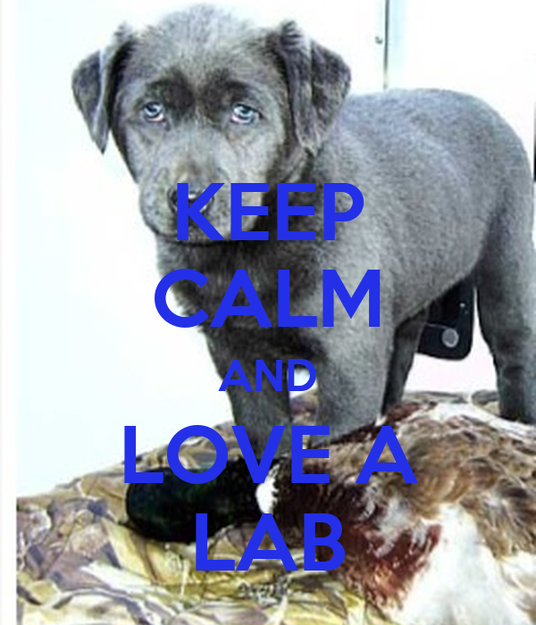 KEEP CALM AND LOVE A LAB