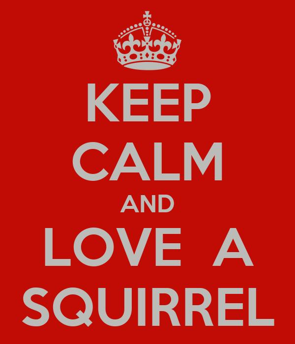 KEEP CALM AND LOVE  A SQUIRREL