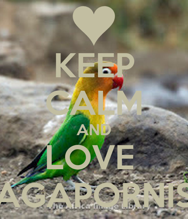 KEEP CALM AND LOVE  AGAPORNIS