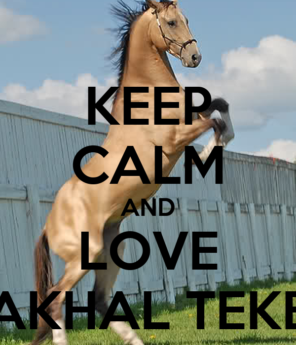 KEEP CALM AND LOVE AKHAL TEKE
