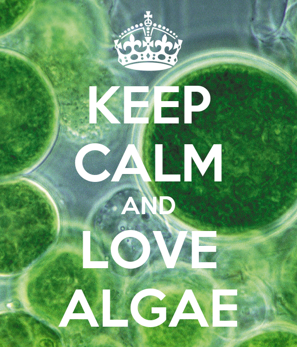 how to keep algae alive