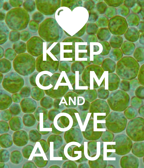 KEEP CALM AND LOVE ALGUE
