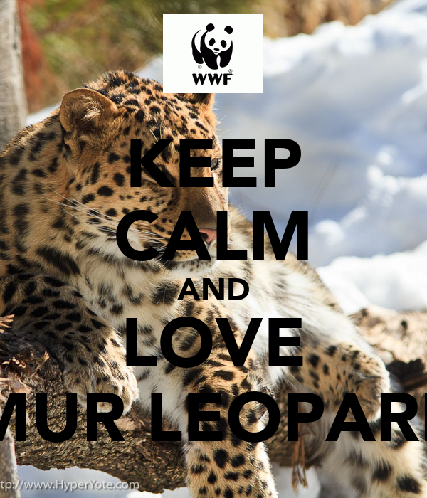 KEEP CALM AND LOVE AMUR LEOPARDS
