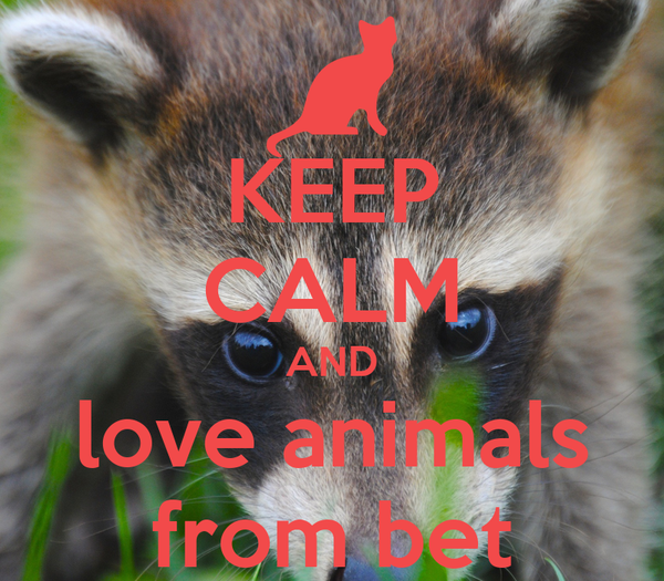 KEEP CALM AND love animals from bet