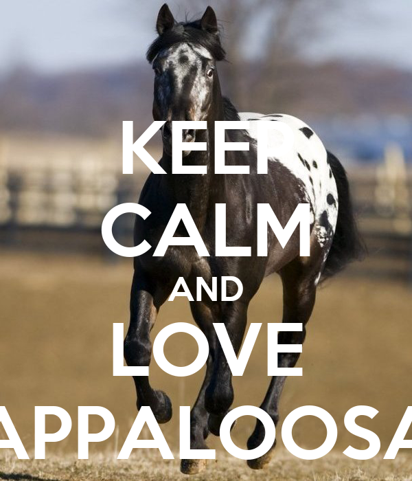 KEEP CALM AND LOVE APPALOOSA