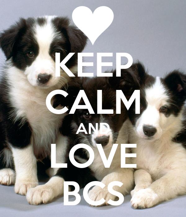 KEEP CALM AND LOVE BCS