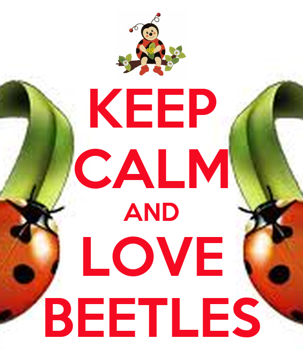 KEEP CALM AND LOVE BEETLES