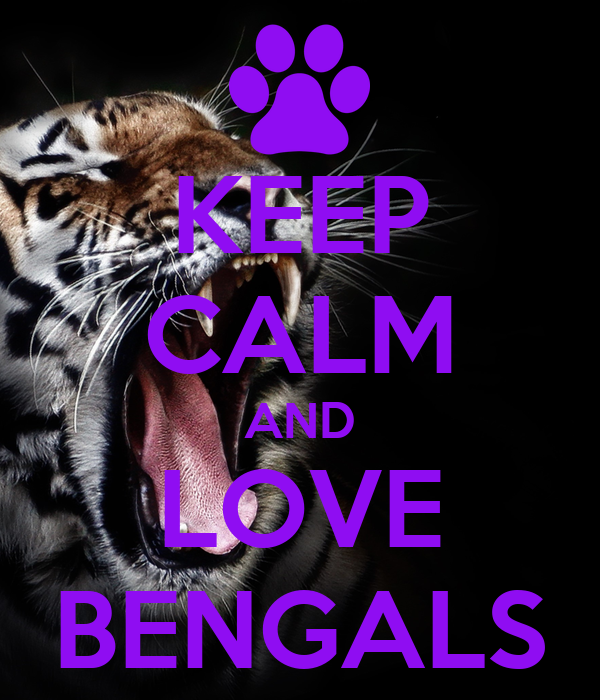 KEEP CALM AND LOVE BENGALS