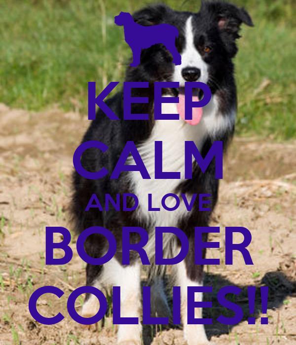 KEEP CALM AND LOVE BORDER COLLIES!!