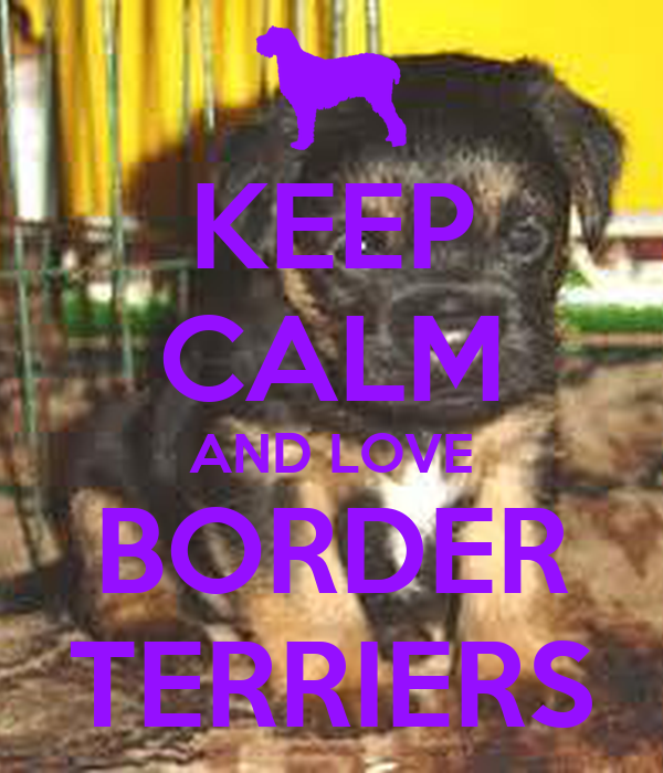 KEEP CALM AND LOVE BORDER TERRIERS