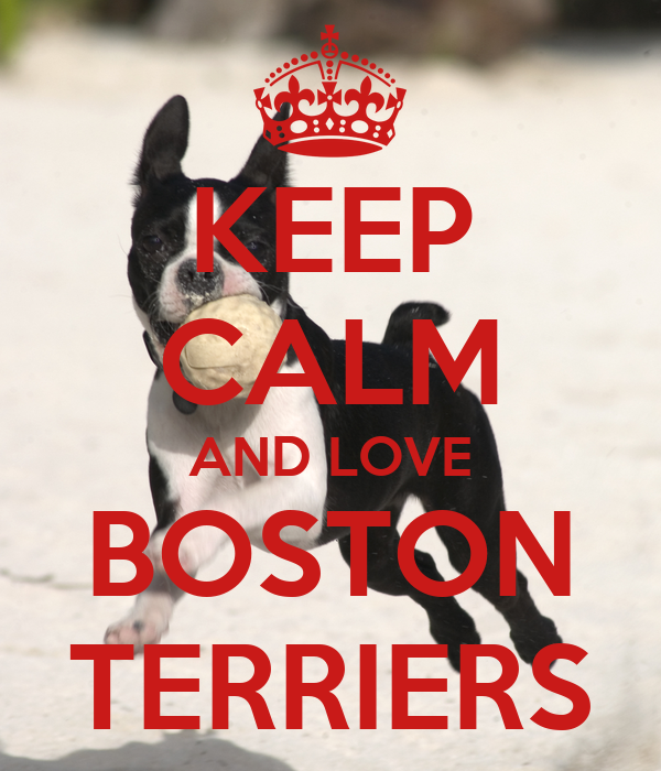 KEEP CALM AND LOVE BOSTON TERRIERS