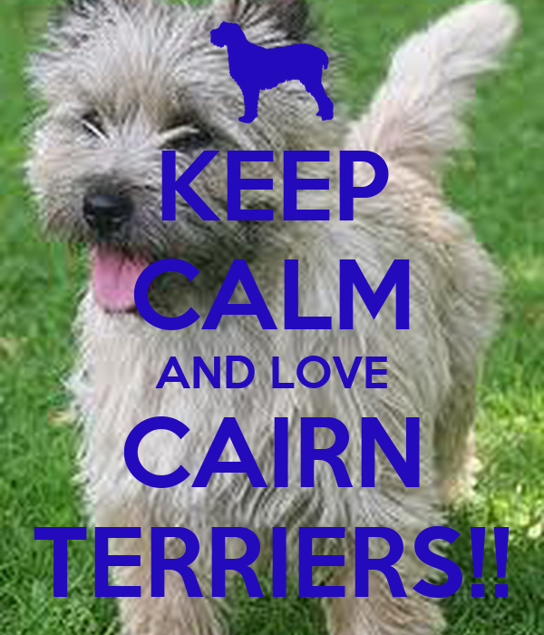 KEEP CALM AND LOVE CAIRN TERRIERS!!