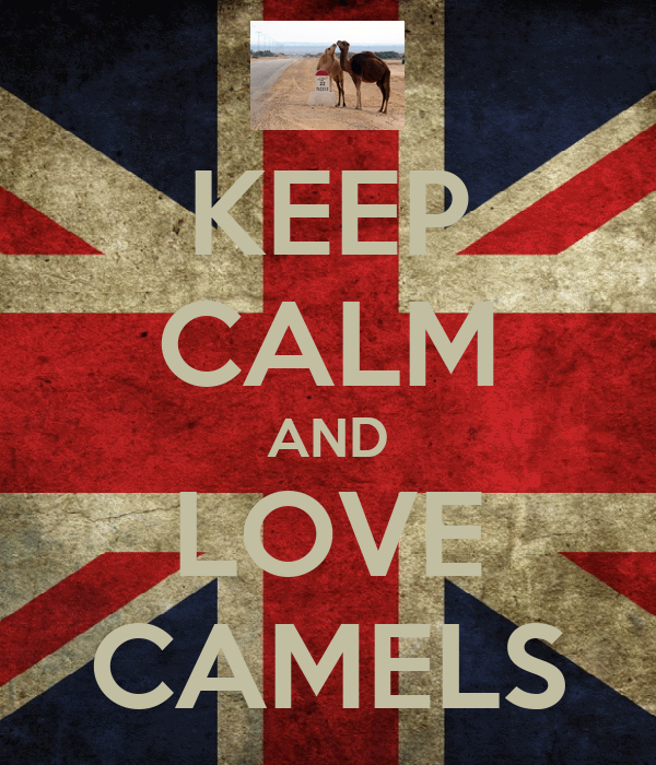 KEEP CALM AND LOVE CAMELS