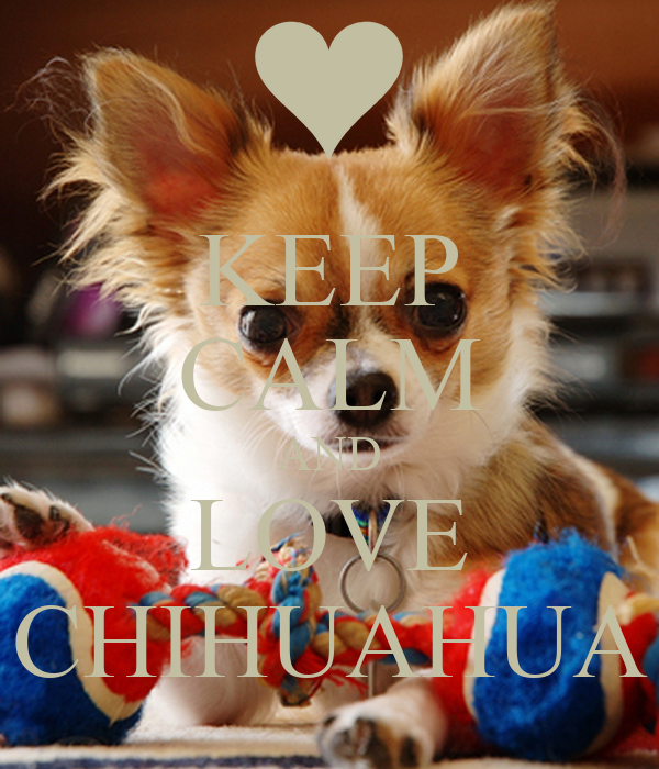 KEEP CALM AND LOVE CHIHUAHUA