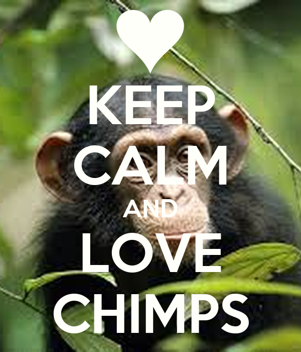 KEEP CALM AND LOVE CHIMPS