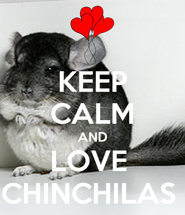 KEEP CALM AND LOVE  CHINCHILAS